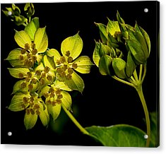 Acrylic Print featuring the photograph Glow by Len Romanick