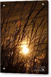 Glow Through The Grass Acrylic Print