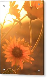 Glowing Acrylic Print