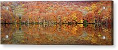 Glowing Autumn Acrylic Print