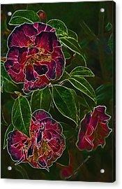 Glowing Camellia Acrylic Print