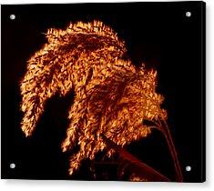 Glowing Embers Acrylic Print