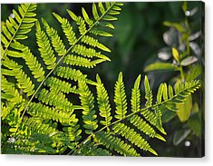 Glowing Fern Acrylic Print