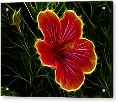 Glowing Hibiscus Acrylic Print by Shane Bechler
