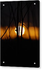 Acrylic Print featuring the photograph Glowing Lace by Jani Freimann
