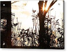 Glowing Landscape Acrylic Print