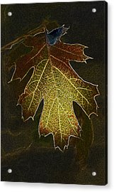 Acrylic Print featuring the photograph Glowing Leaf by Judi Baker