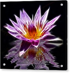 Glowing Lilly Flower Acrylic Print by Shane Bechler