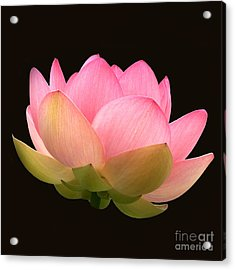 Glowing Lotus Square Frame Acrylic Print
