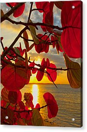 Glowing Red Acrylic Print by Stephen Anderson