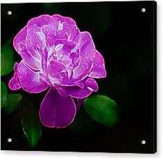 Glowing Rose II Acrylic Print