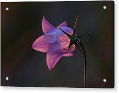 Glowing Sunset Flower Acrylic Print