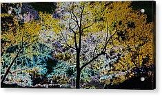 Glowing Trees Acrylic Print