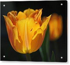 Glowing Tulips Acrylic Print by Rona Black
