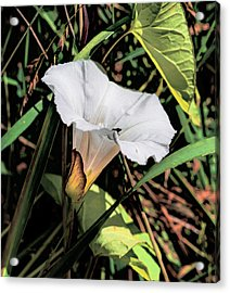 Acrylic Print featuring the photograph Glowing White Flower by Leif Sohlman