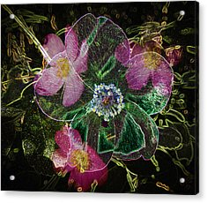 Glowing Wild Rose Acrylic Print