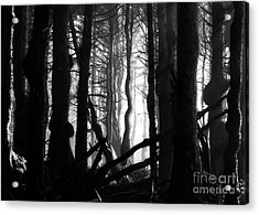 Gnarled Acrylic Print by Deena Otterstetter