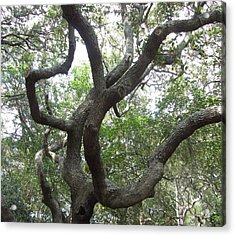Acrylic Print featuring the photograph Gnarled Tree by Cathy Lindsey