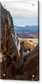 Gnarly Desert Cypress In Utah Acrylic Print