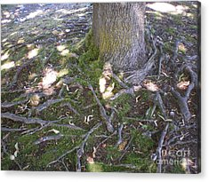 Gnarly Acrylic Print by Suzanne McKay