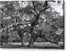 Gnarly Tree  Acrylic Print