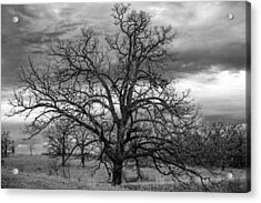 Acrylic Print featuring the photograph Gnarly Tree by Sennie Pierson