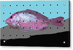 Go Fish Acrylic Print