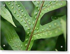 Go Green Acrylic Print