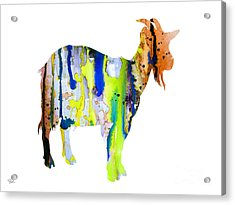 Goat 3 Acrylic Print
