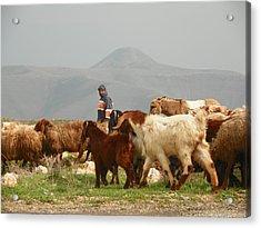 Goat Herder In Jordan Valley Acrylic Print by Noreen HaCohen