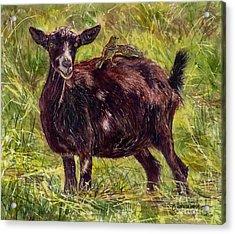 Goat Piggybackers Acrylic Print