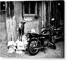 Goatercycle Black And White Acrylic Print