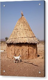 Goats And Hut In Himba Village, Opuwo Acrylic Print by Jaynes Gallery