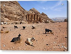 Goats In Front Of The Monastery At Petra In Jordan Acrylic Print by Robert Preston