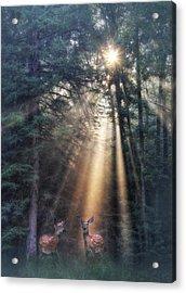 God's Creatures Acrylic Print by Lori Deiter