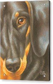 Goggie Daschund Acrylic Print by Karen Coombes