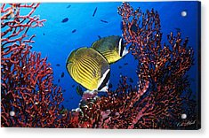 Going For A Swim Acrylic Print by Cole Black
