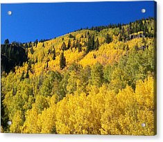 Acrylic Print featuring the photograph Going Gold by Fortunate Findings Shirley Dickerson