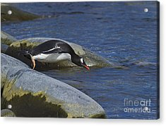 Going In.. Acrylic Print by Nina Stavlund