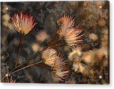 Going To Seed Two Acrylic Print