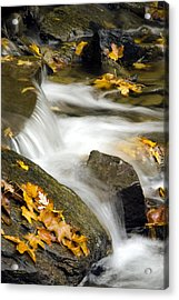 Going With The Flow Acrylic Print by Christina Rollo