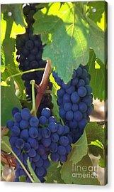 Golan Grapes Acrylic Print