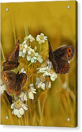 Gold And Brown Acrylic Print