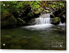 Gold Creek  Acrylic Print by Tim Rice