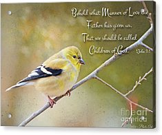 Gold Finch On Twig With Verse Acrylic Print by Debbie Portwood