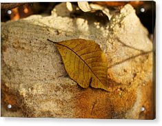 Acrylic Print featuring the photograph Gold Leaf by Jane Eleanor Nicholas