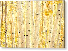 Golden Aspens Utah Acrylic Print