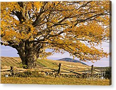 Golden Autumn Acrylic Print by Alan L Graham