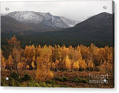 Golden Autumn - Cairngorm Mountains Acrylic Print by Phil Banks