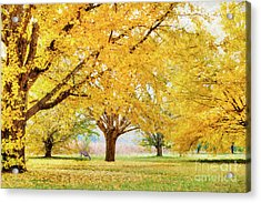 Golden Autumn Acrylic Print by Darren Fisher